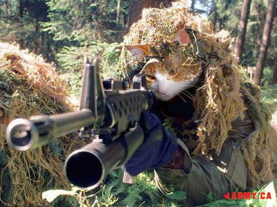 Sniper cat is going in for the kill